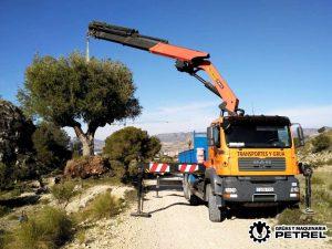 Transplante de Olivo con grua camion