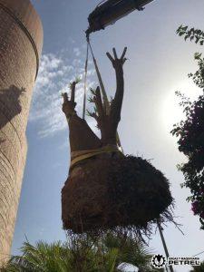 camion grua jardineria petrer elda sax monovar